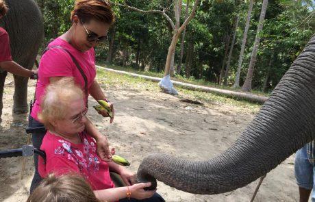 Besuch bei Elefanten